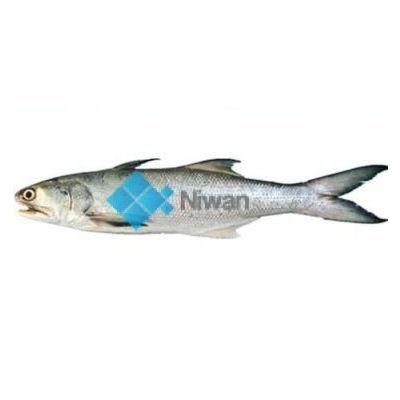 Indian Salmon (Rawas)