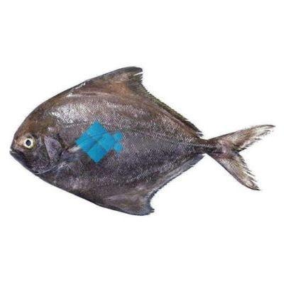 Black Pomfret (Kala Paplet 4/5 per kg)