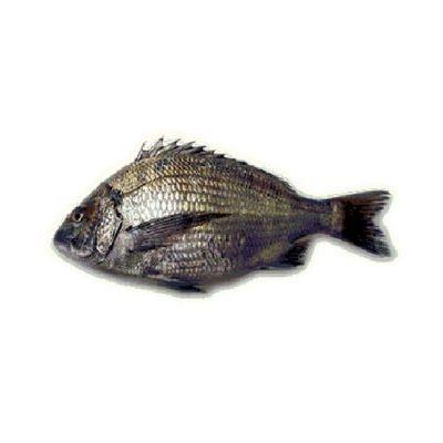 Black Sea Bream Fish (Kala Dandia)